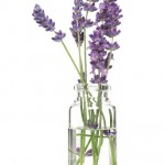 Essential Health with Lavender Oil